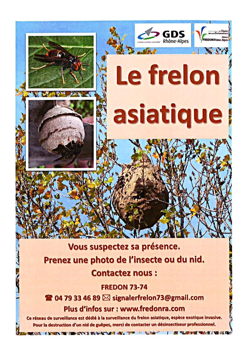 le-frelon-asiatique